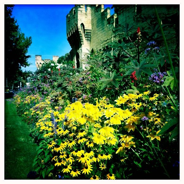 Flowers along the outer wall of Avignon. August 2011. Photo by Gerould Kern.