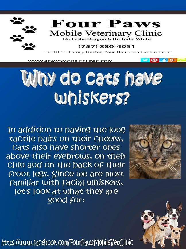 Pin by Four Paws Mobile Veterinary Cl on Why do cats have