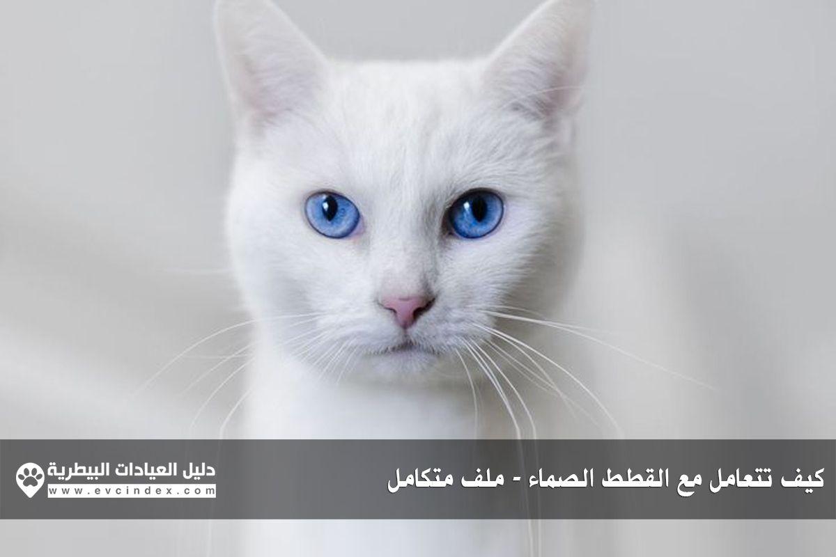 عند الحديث عن الإعاقة في القطط قد يعتقد البعض انها تعني فقط القطط التي فقدت احد أطرافها سواء في حادث أو ولدت بعيب خلقي بدون أطراف Witte Kat Katten Blauwe Ogen