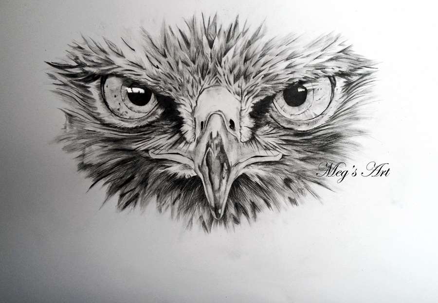 Line Drawing Animal Face : Buzzard face drawing by stardust tattoo ideas