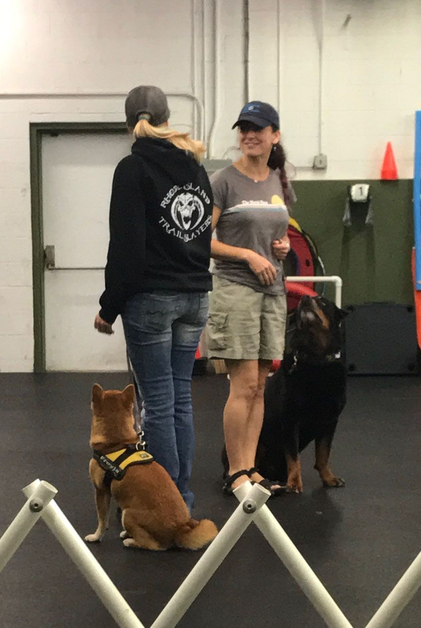 Canine Good Citizen Grooming Style Dog Training Good Citizen