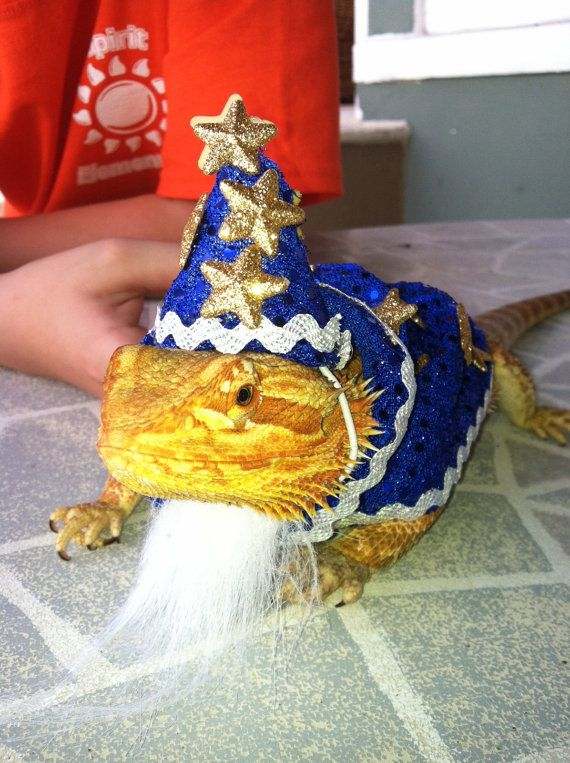 Wizard Costume For Bearded Dragon On Etsy 1500 Bearded Dragon