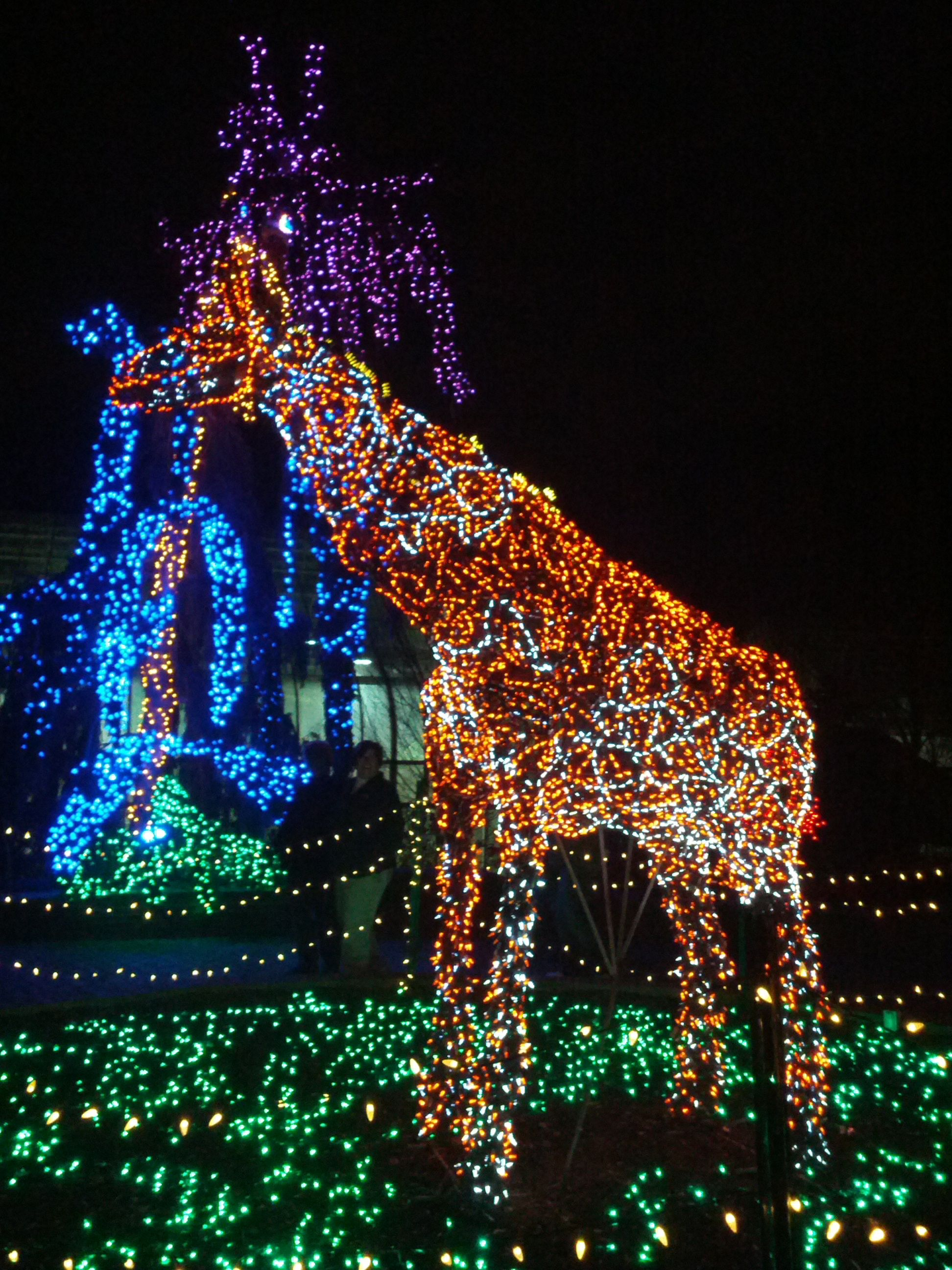 garden of lights brookside