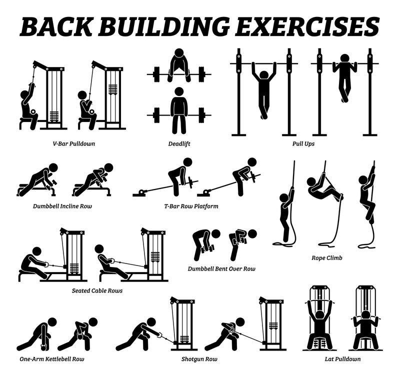 Muscle Building Body Builder Gym Fitness Exercise
