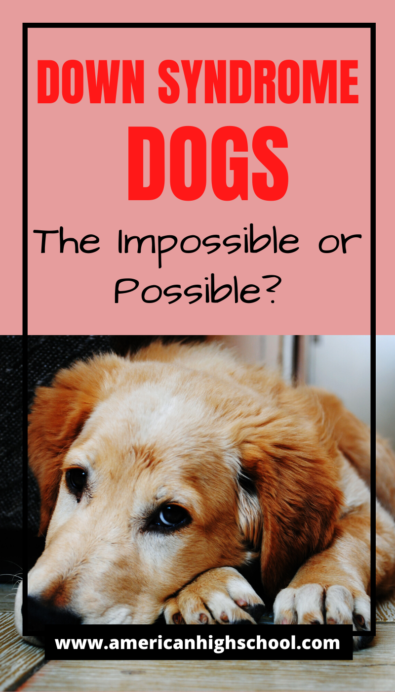 Down Syndrome Dogs The Impossible or Possible? Anjing