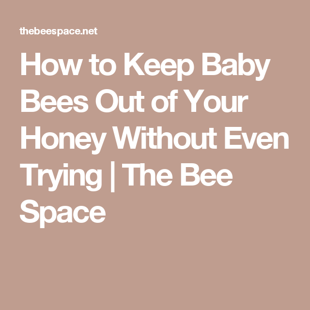 How to Keep Baby Bees Out of Your Honey Without Even Trying | The Bee Space