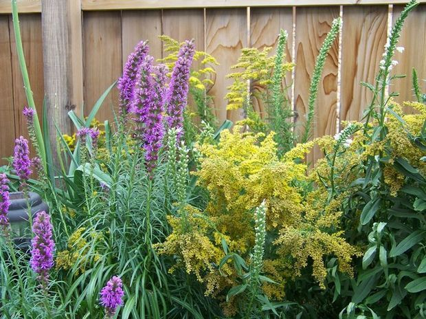 See 25 Native Ohio Perennials For Your Garden Vibrant Color And