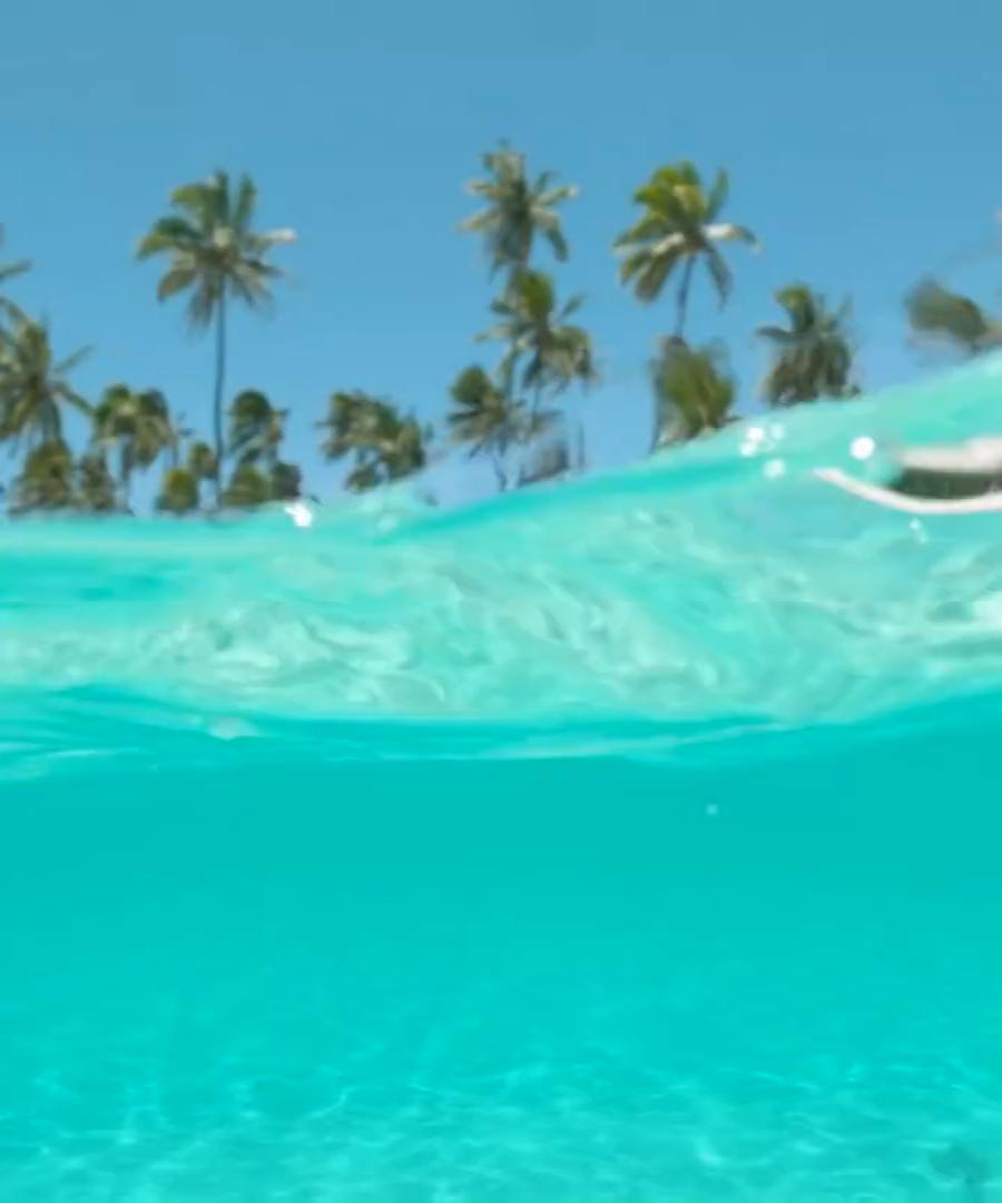 Dolphin Discovery Punta Cana. Bavaro Splash Punta Cana. Marina Caribe Platinum VIP.