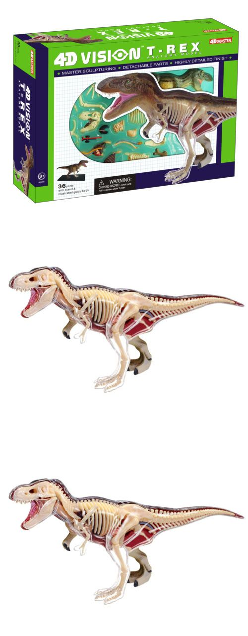 Animals and Nature 31744: Fame Master T-Rex Anatomy Model ...