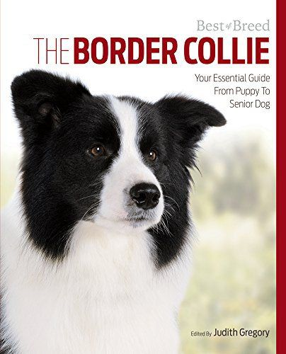 The Border Collie Your Essential Guide From Puppy To Senior Dog