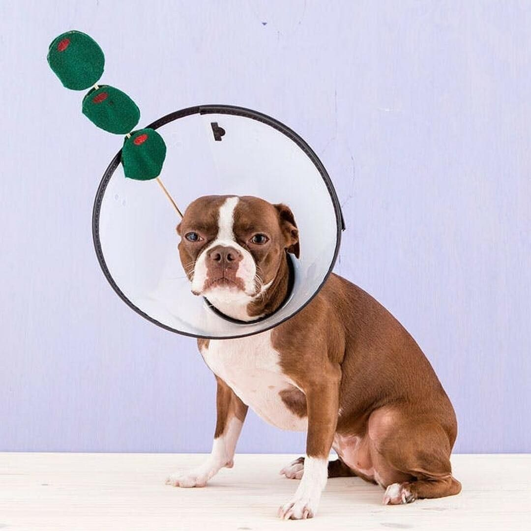 diy dog costumes | 2018 diy dog costume ideas | pinterest | diy dog