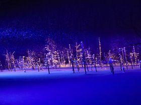 北海道美瑛町青い池の絶景冬景色と夜のライトアップ北海道LINEトラベルjp 旅行ガイド