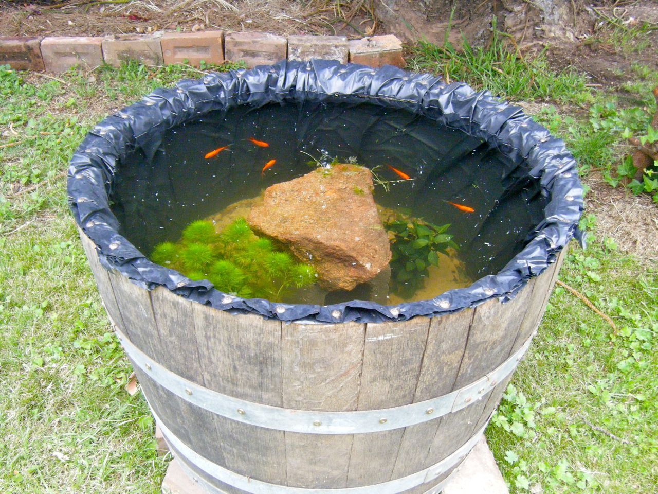 Barrel Fish Pond That 39 S One Of The Wine Barrels Mick Got
