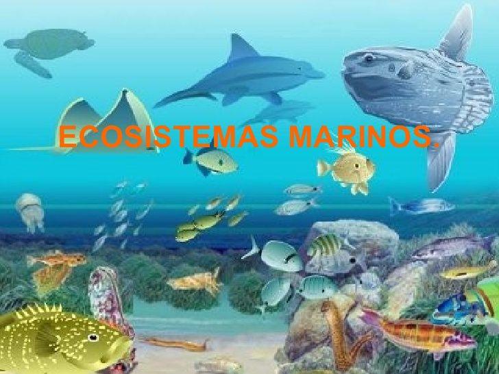 El Ecosistema Marino Intermareal Https Www Youtube Com Watch V 8cvtpzm8v0a Ecosistema Marino Ecosistemas Ecosistema Acuatico