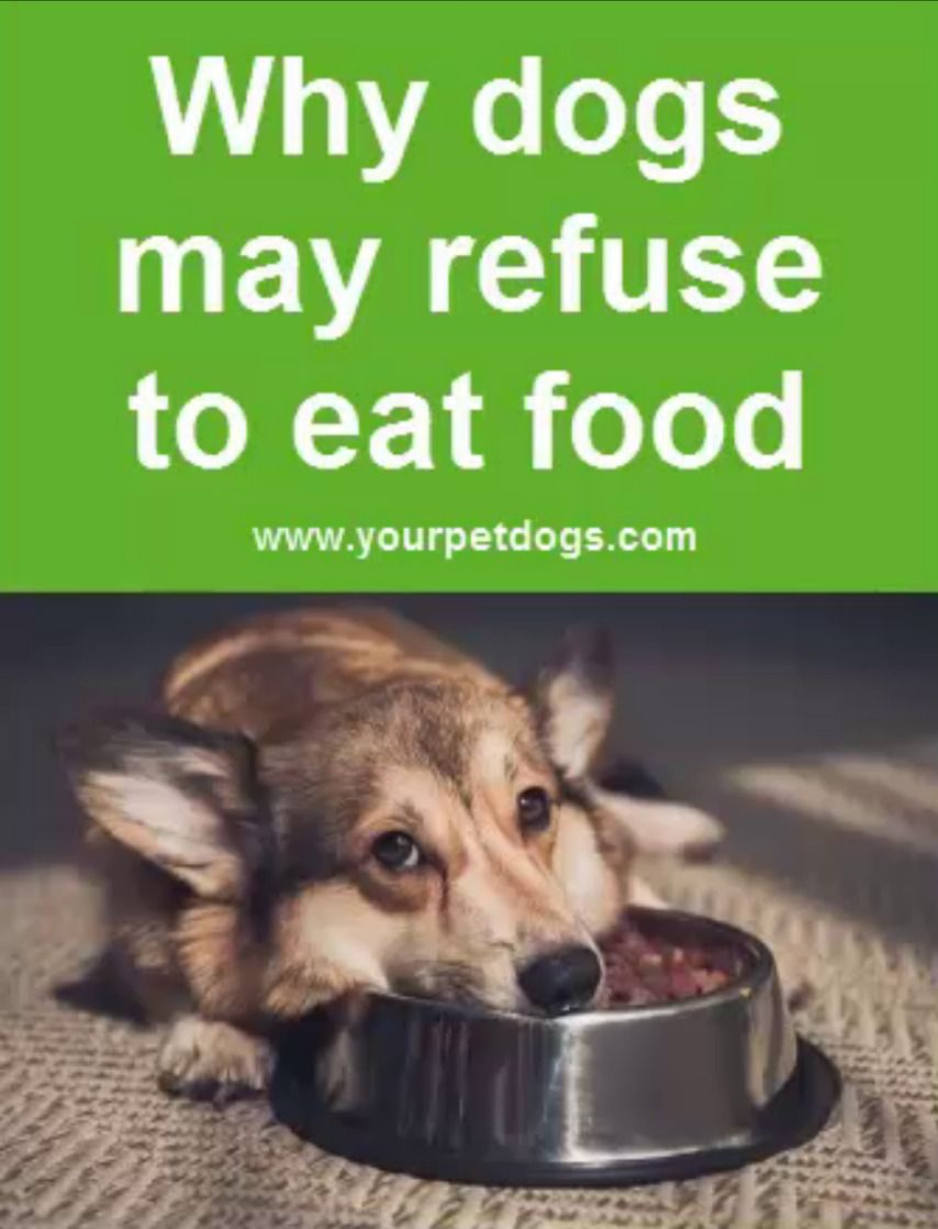 Pin By Mad For Mcm On Pet Goodies Treats Tips In 2020 Dog