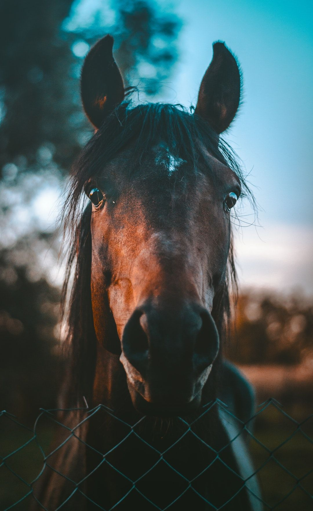 Animal Horse Iphone Wallpaper And Download Hd Photo By Marko Blazevic Kerber On Unsplash Horse Wallpaper Horses Pretty Horses
