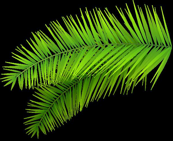 Palm Leaves Decoration PNG Clip Art Image   Border ...