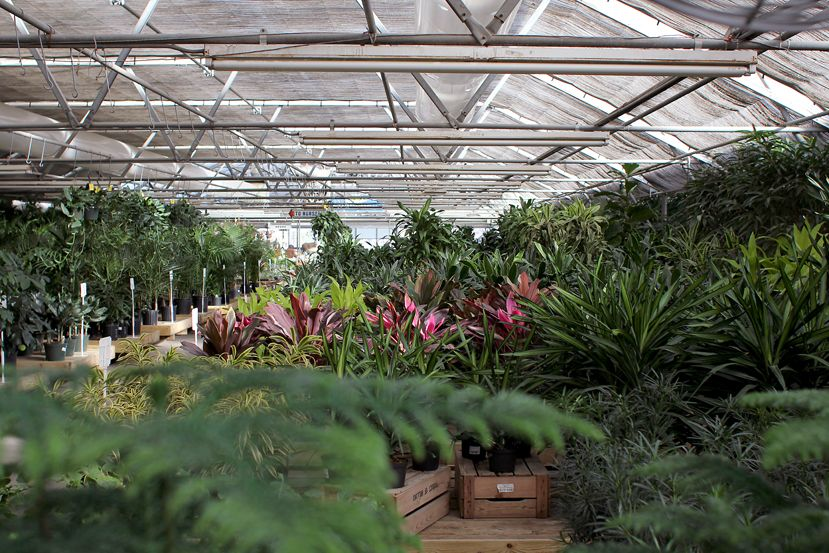 Paulino Gardens Is Our Absolute Favorite Nursery Plant Store Hands