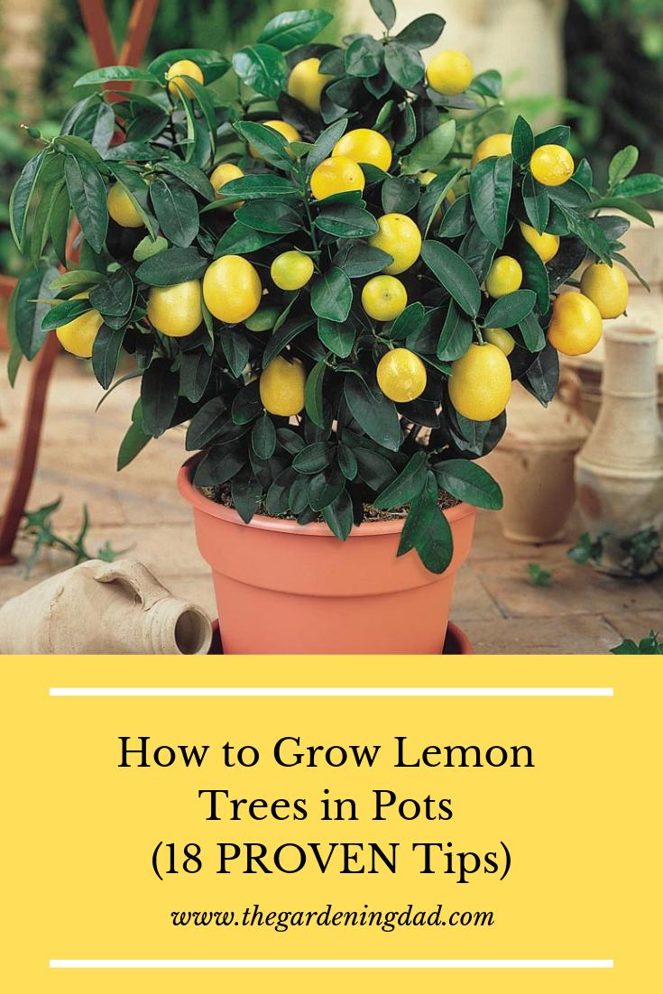 06a8f6c8e6bcae9d575c9f21af64a7e3 - Growing Citrus The Essential Gardener's Guide