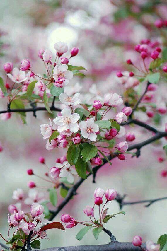 le printemps une vision de paradis fleurs flores. Black Bedroom Furniture Sets. Home Design Ideas