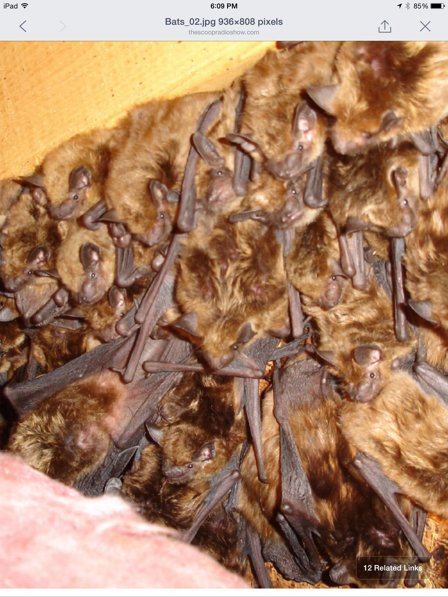 Pin by linda thompson on animals getting rid of bats