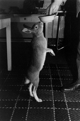 Irish Hare 1956 Life With Horace The Housebroken Hare Hare