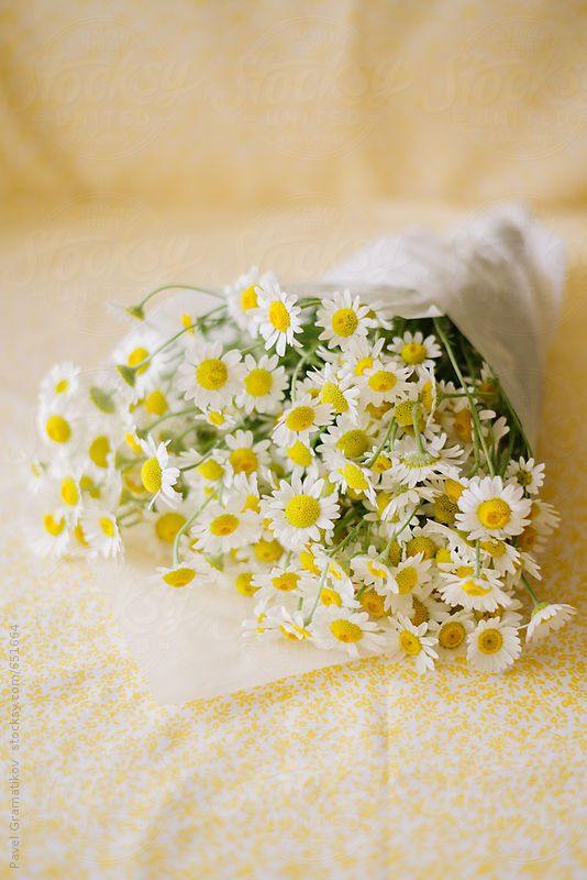 A bouquet of freshly cut camomile flowers ~~ by Pixel Stories ...