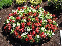 bildergebnis f r grabbepflanzung sommer beispiele grabschmuck pinterest grabbepflanzung. Black Bedroom Furniture Sets. Home Design Ideas