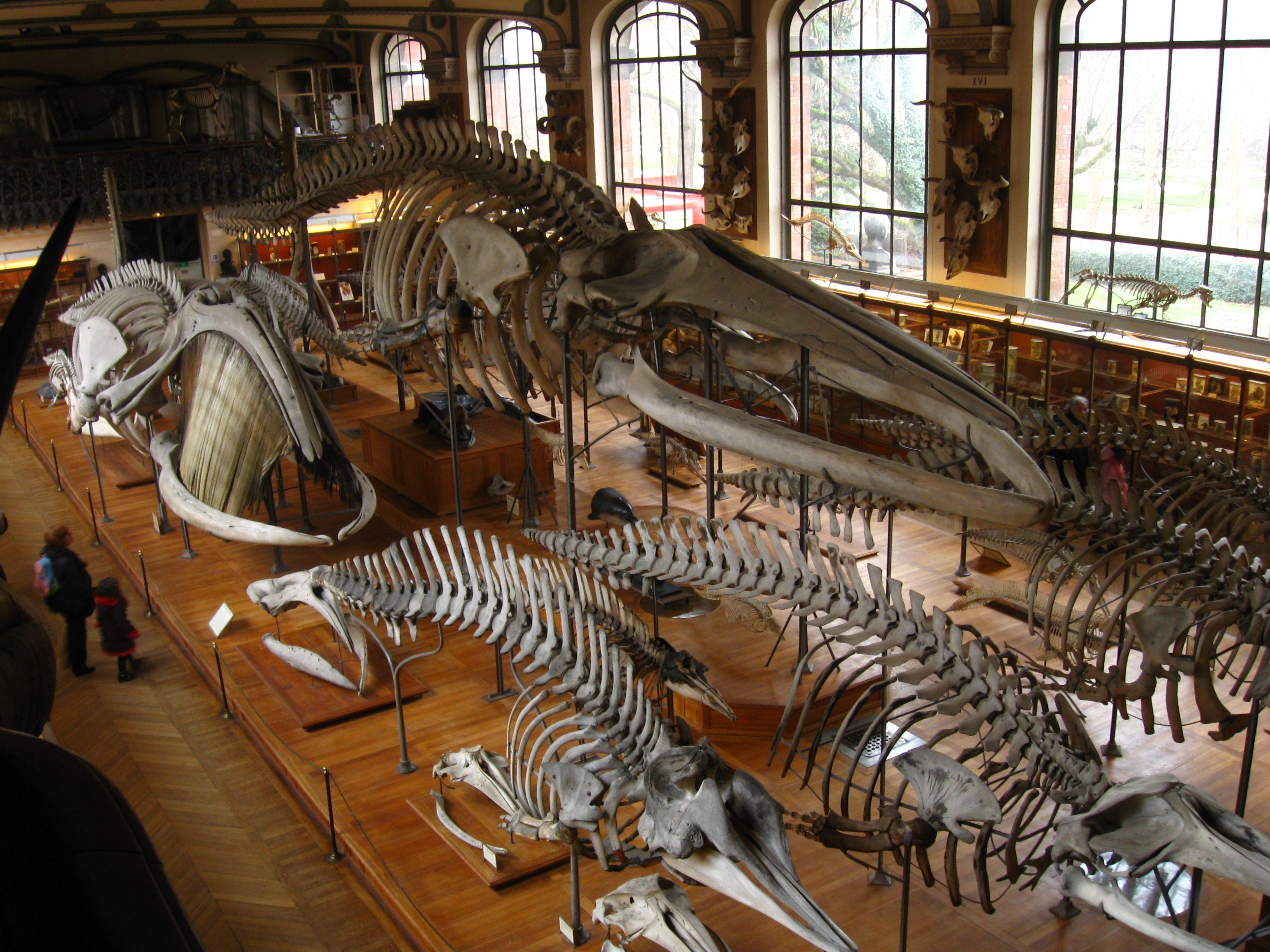 natural history museum paris - Google Search | 02 / art / nature ...