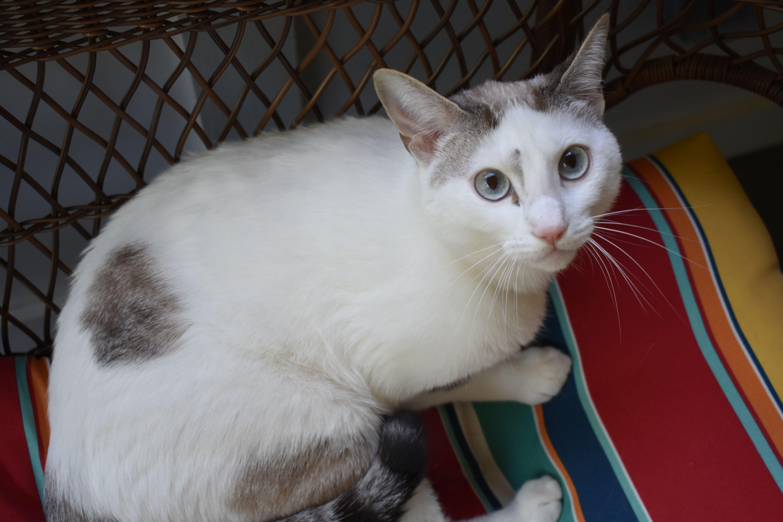 Adopt Stella Rosa on Petfinder Cat allergies, Help