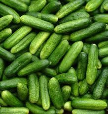 PARIS PICKLING CUCUMBERS heirloom variety 50 Days  Very popular Gherkin type (Cornichon) Cucumber. Small fruits are extremely plentiful and