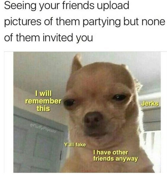 20 Chihuahua Memes That Are Too Funny Not To Laugh