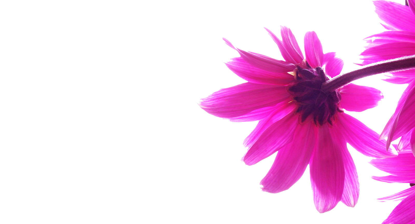 Girly Photoshop Backgrounds Pink Art Flower Backgrounds Pink Wallpaper