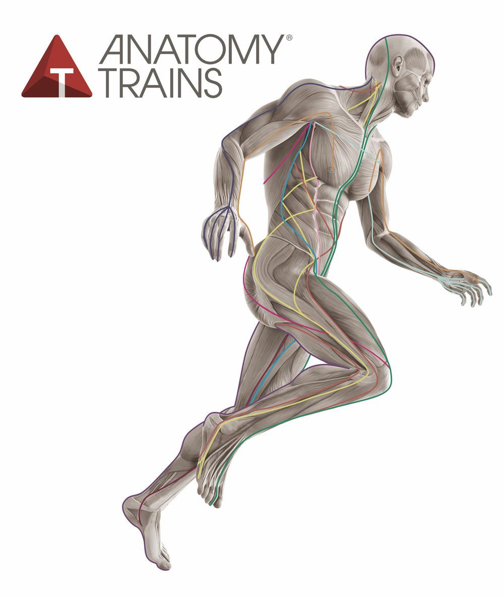 Anatomy Trains in Motion | Pilates Pins | Pinterest | Anatomy and ...