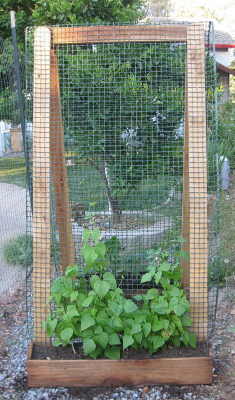 Build a trellis. Using sturdy materials like 2 x 4's and hardware cloth, you can fashion trellises for all of your climbing and vining edibles, ...