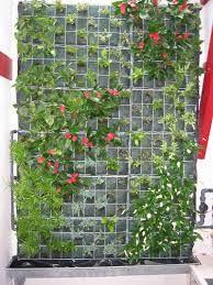 """Résultat de recherche d'images pour """"Mur vegetal"""""""