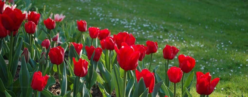 Fond D Ecran Gratuit Paysage D Ete Les Plus Belles Photos Par Bonjour Nature Fond Ecran Gratuit Image Nature Paysage