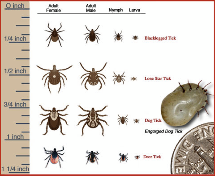 06ace18488bb417f1c93f2638ac24b64 - How To Get Fleas And Ticks Out Of Your Yard