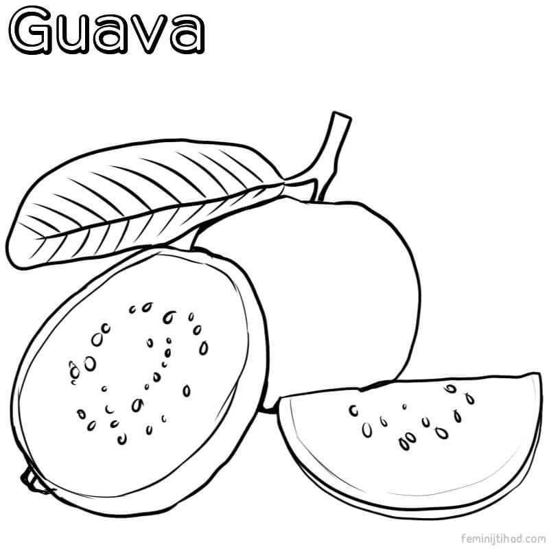 Guava Coloring Pages Pdf For Kids Free Coloring Sheets In 2021 Coloring Pages For Kids Sunflower Coloring Pages Coloring Pages
