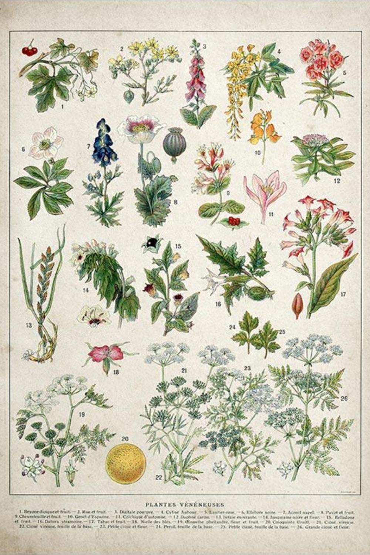 vintage flower posters botanical