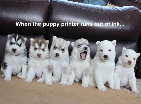 puppy ink
