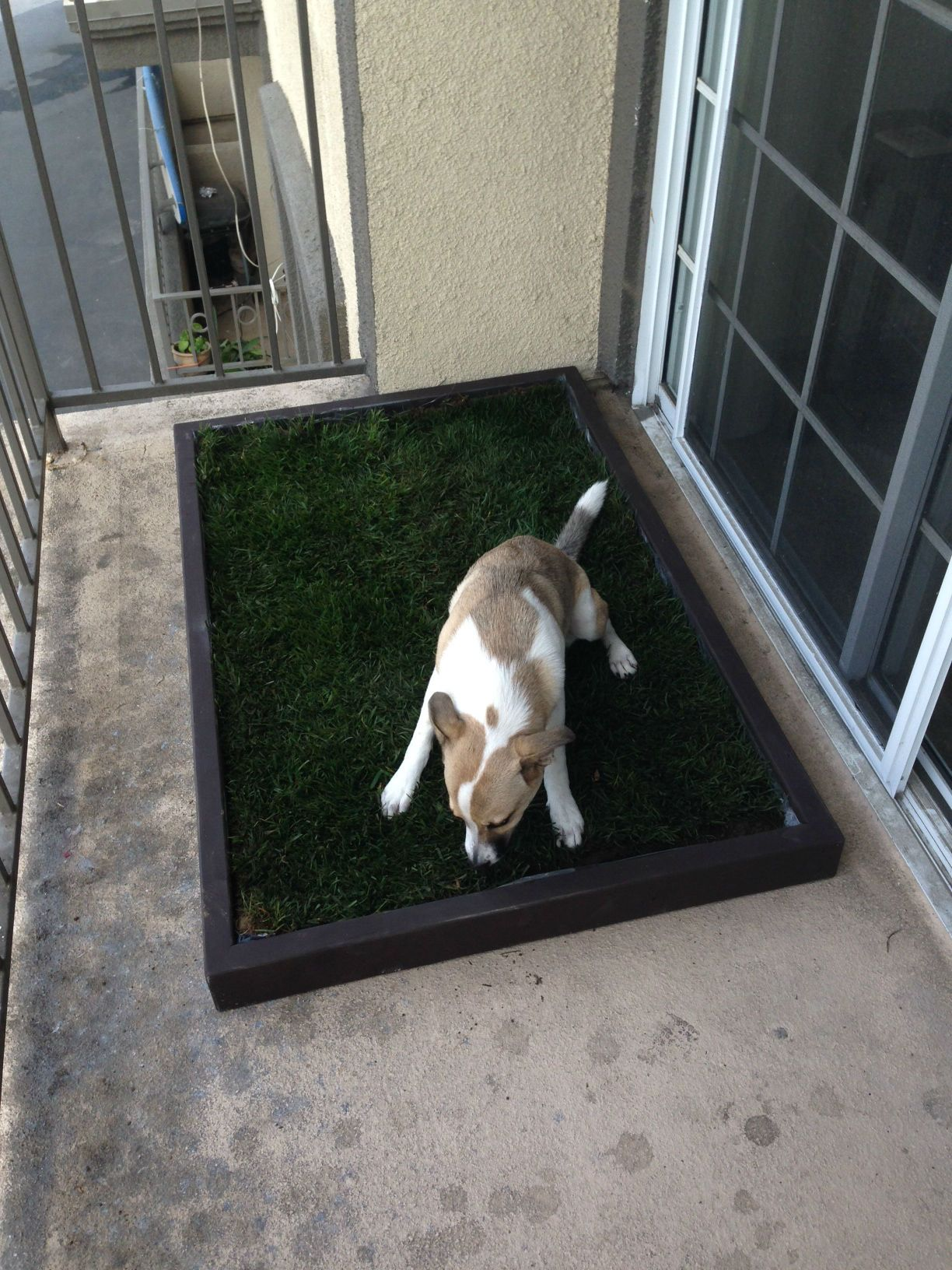 Doggy and the Large dog litter box with real grass fits on this patio perfectly. See more at www.doggyandthecity.com. #photooftheday #dog #puppy #pup #dogsofpinterest #pet #pets #animal #animals #petlovers #dogsitting #ilovemydog #dogoftheday #lovedogs #lovepuppies #doglover #cutedog #cutedogs #dyipetprojects #lovedogs #doglovers #doggies #doggiestyle #dogsandpuppies #petsmart #petcrafts #petsdiy #apartmentdiy #dogpottyarea #dogpottybox #dogpottypatch #dogpottytraining #petpotty