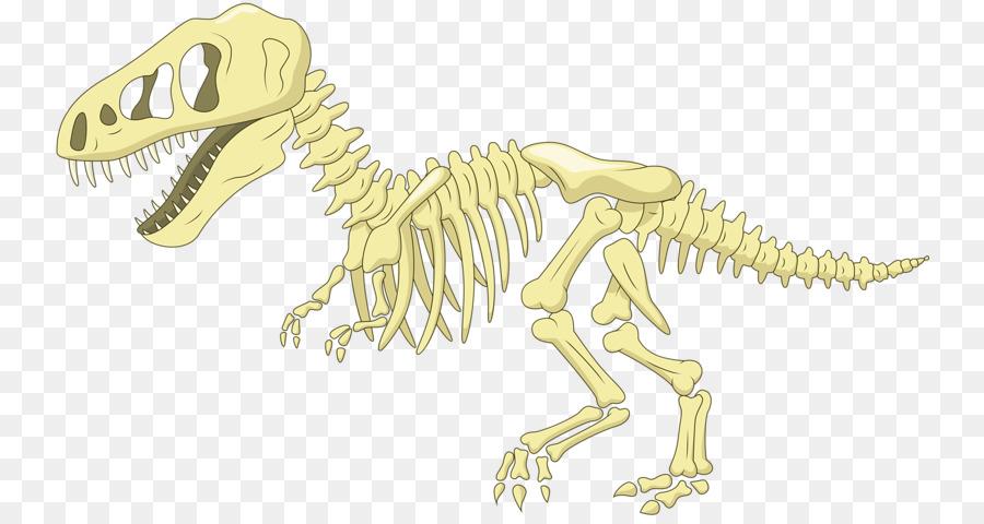 Velociraptor Background Png Download 800 474 Free Transparent Dinosaur Png Download Cleanpng Kisspng Dinosaur Bones Dinosaur Fossils Cartoon Dinosaur