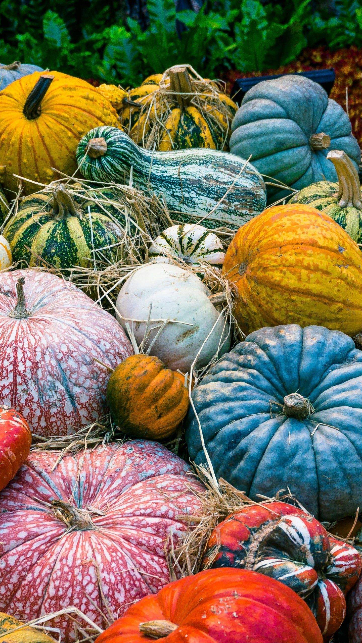 Colorful Pumpkins Wallpaper Iphone Android Desktop Backgrounds Pumpkin Wallpaper Iphone Wallpaper Fall Fall Wallpaper