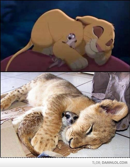 Third picture proving the reality of the lion king