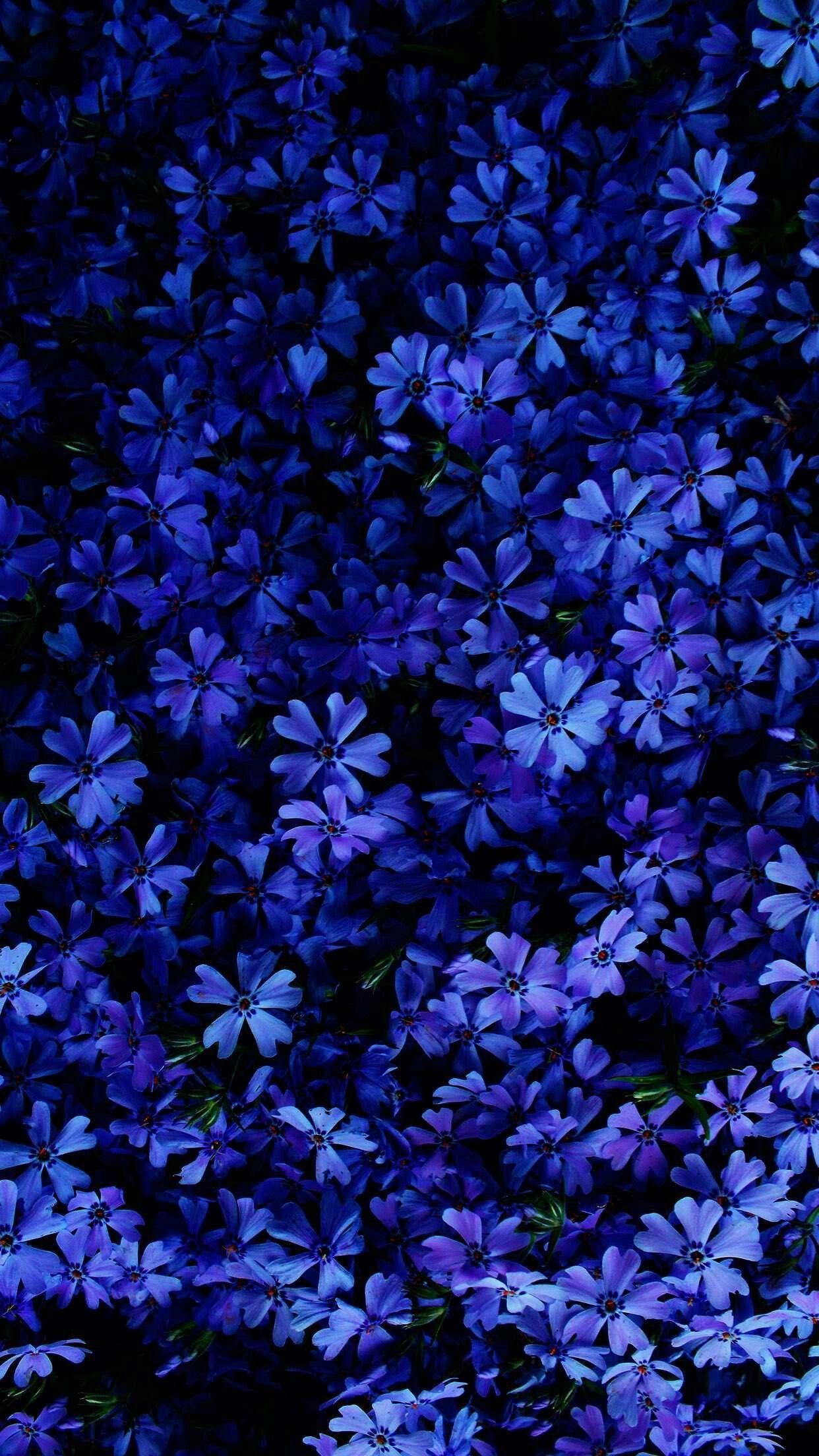 Обои синие, цветы. Цветы foto 6