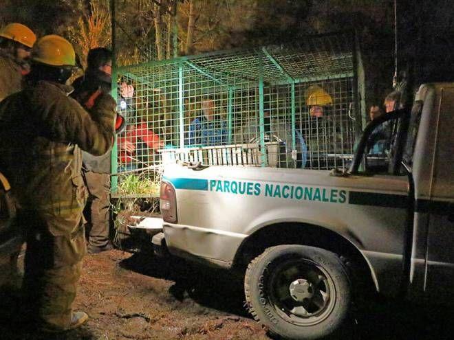 Tras liberación de la puma investigarán manejos ilegales de fauna nativa en Bariloche y alrededores