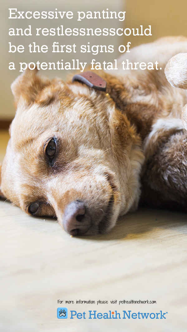 Hypocalcemia in Dogs Pancreatitis in dogs, Pets, Dog care