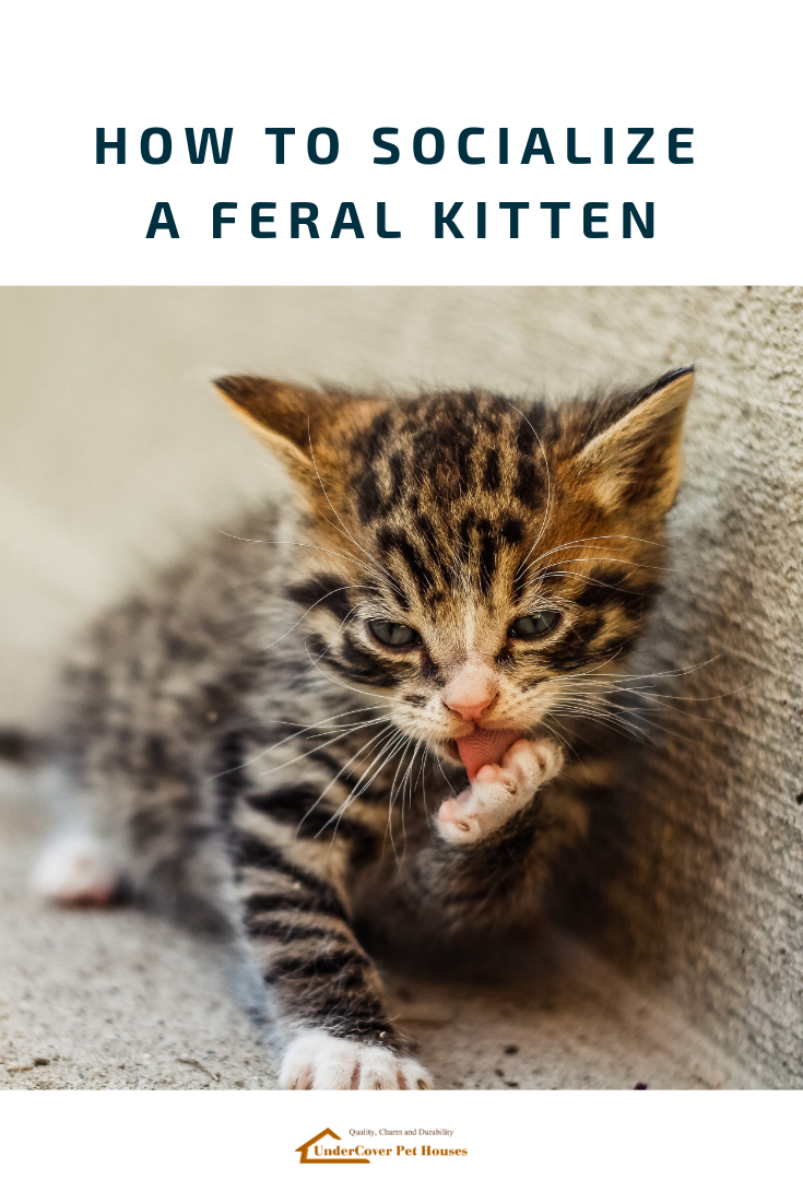 How To Socialize A Feral Kitten In 2020 Feral Kittens Cats Cat Parenting