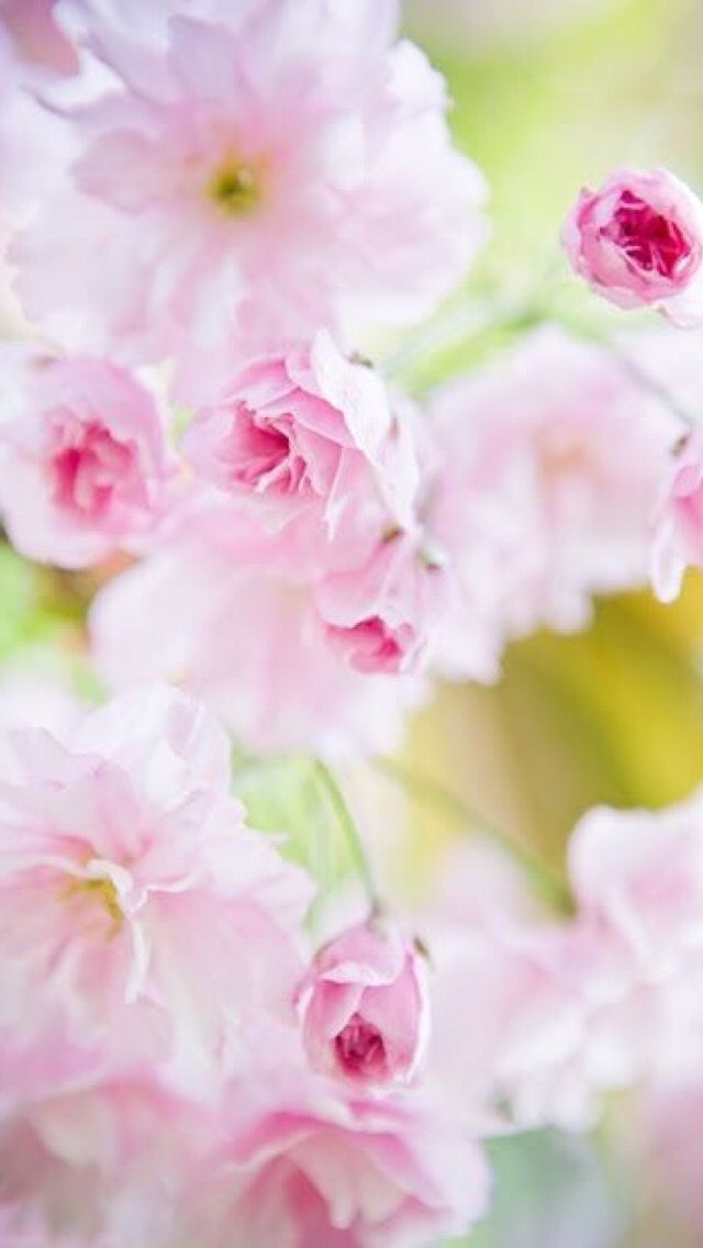 Обои iPhone wallpaper flowers